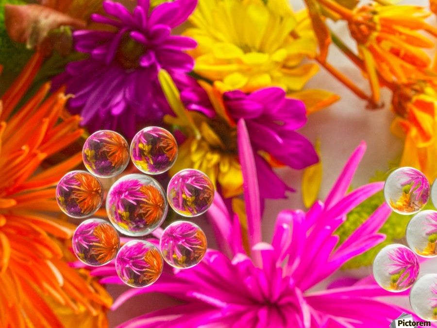 FLOWERS REFRACTION 10  Print
