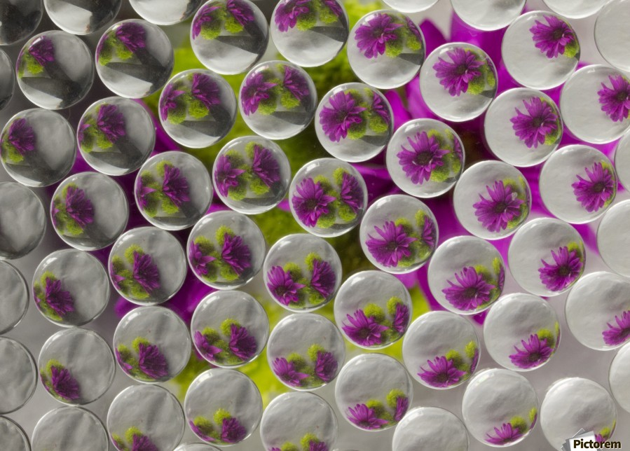 FLOWERS REFRACTION 8  Print