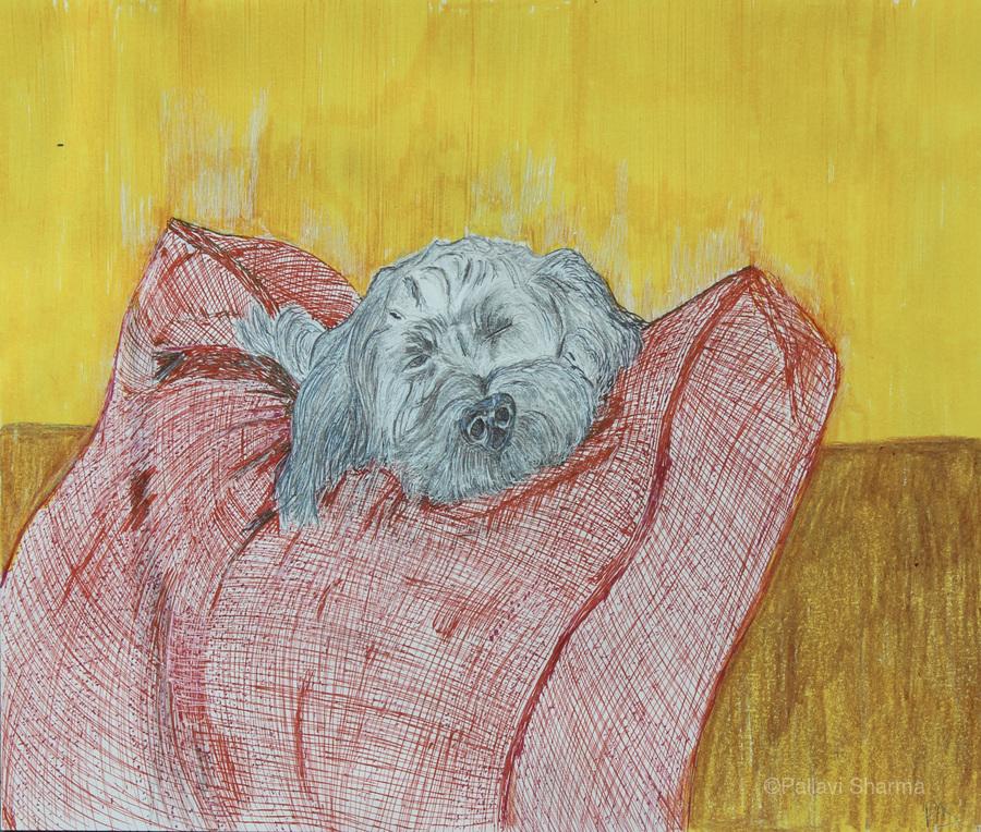 Canine  Print