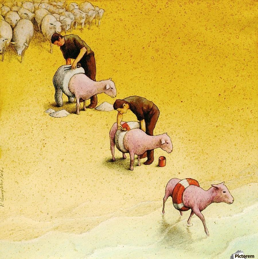Sheep , Pawel Kuczynski ,