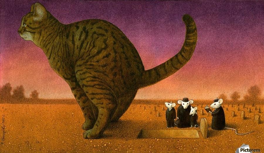 Cat , Pawel Kuczynski ,