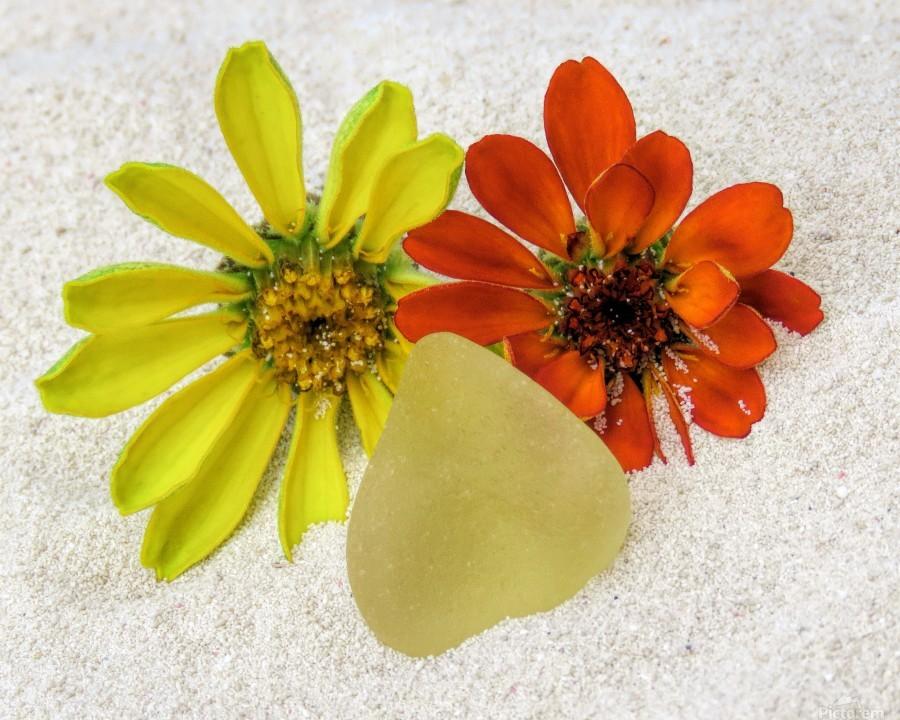 Pale yellow sea glass and zinnias  Print