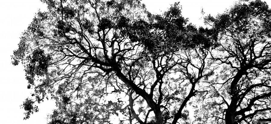 Tree Top  Print