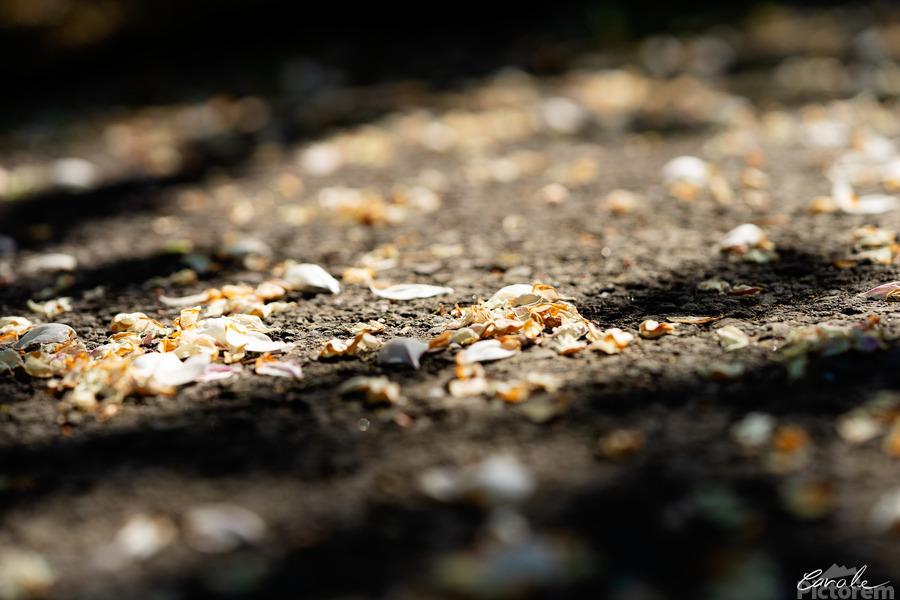 Confettis sur bitume  Imprimer