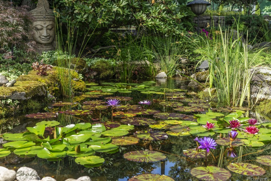 Divin Jardin d   eau   Divine Water Garden  Imprimer