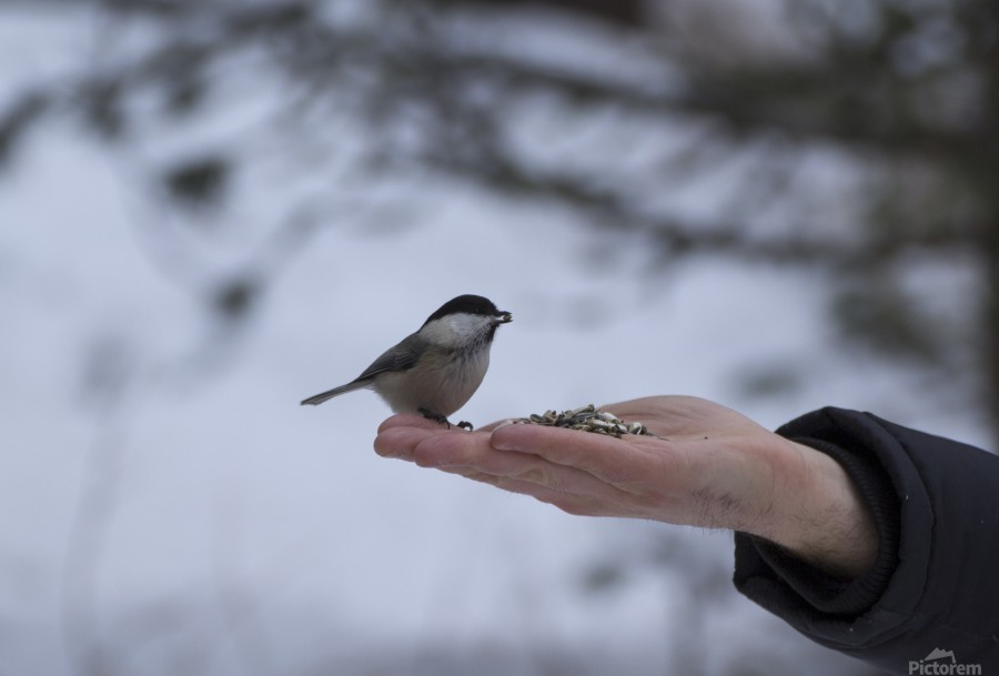 A bird on the hand  Print