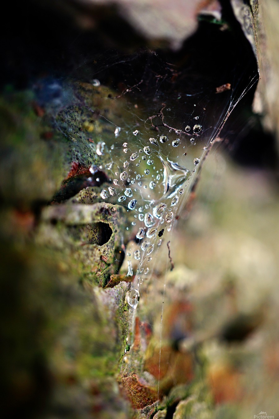 Macro Raindrop Photography Art 44  Print