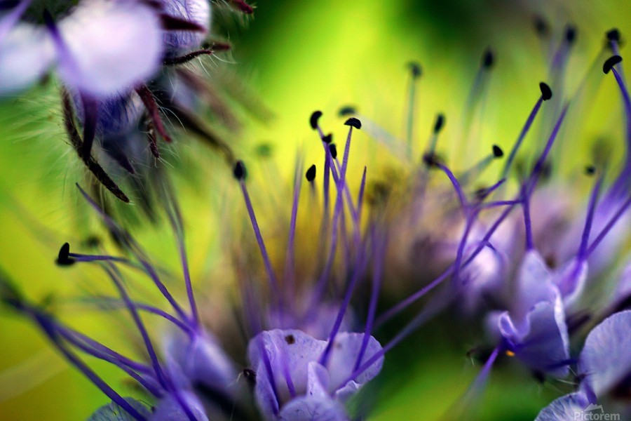 Abstract Pop Color Flower Photography 17  Print