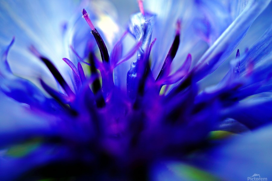 Abstract Pop Color Flower Photography 01  Print