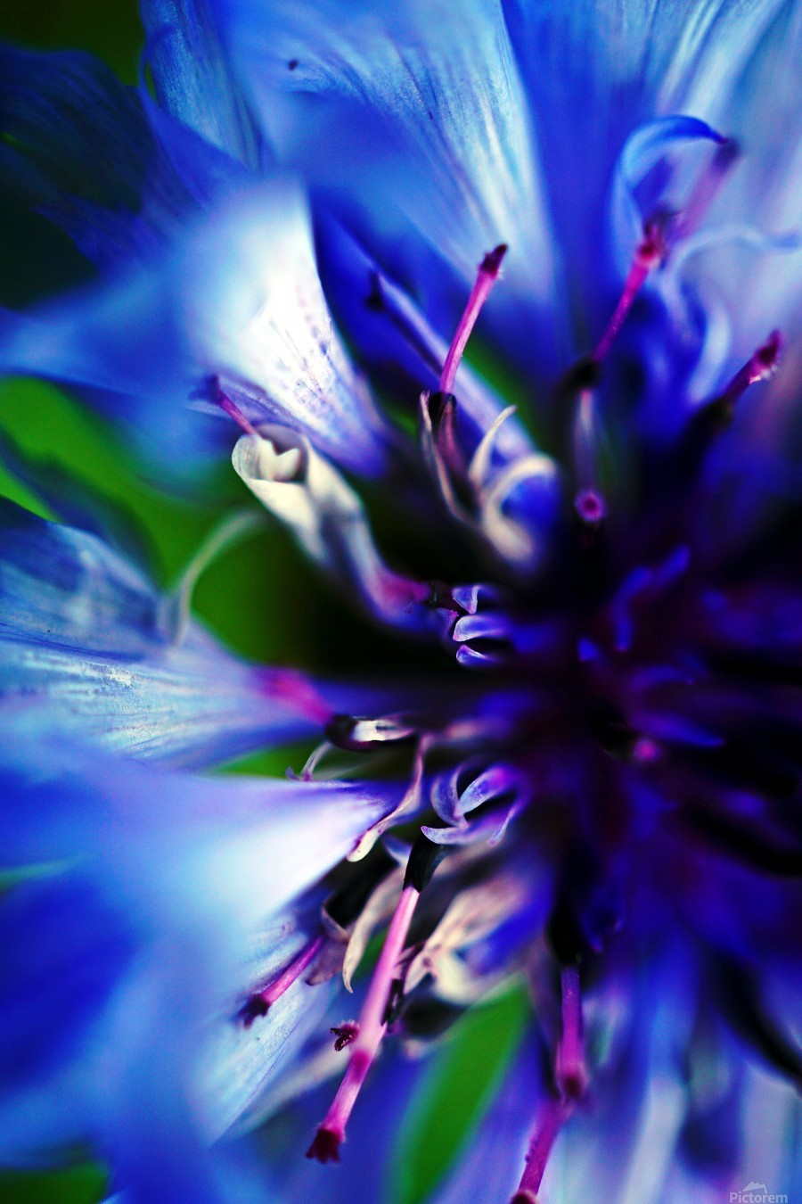 Abstract Pop Color Flower Photography 21  Print