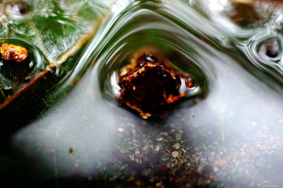 Macro Raindrop Photography Art 45  Print