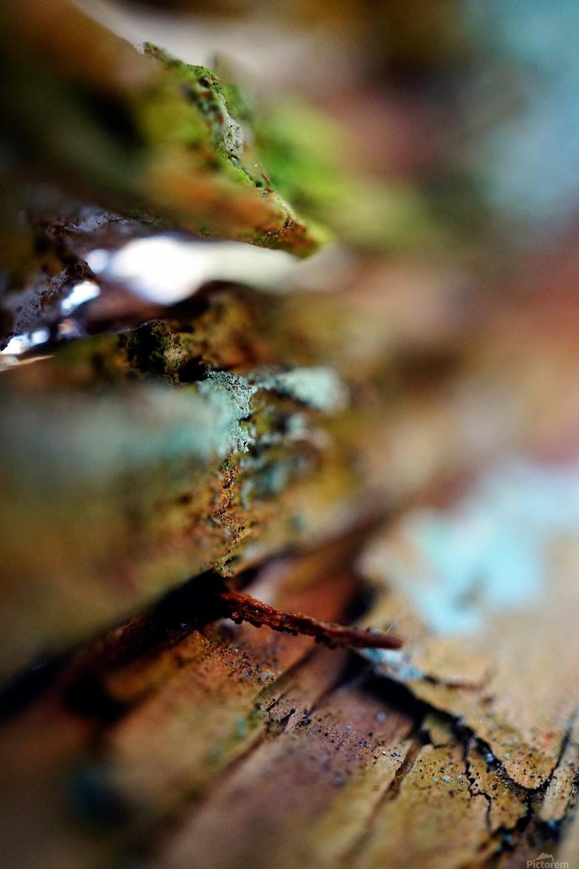 Abstract Macro Nature Photography 95  Print