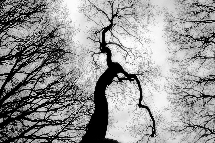 Black and White Abstract Tree 02  Print