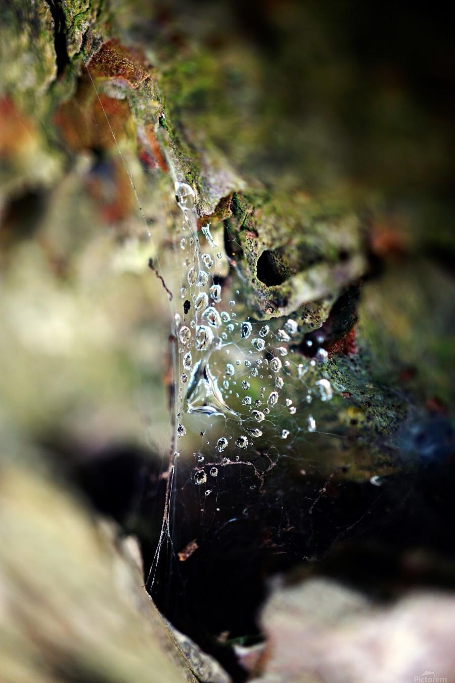 Macro Raindrop Photography Art 05  Print