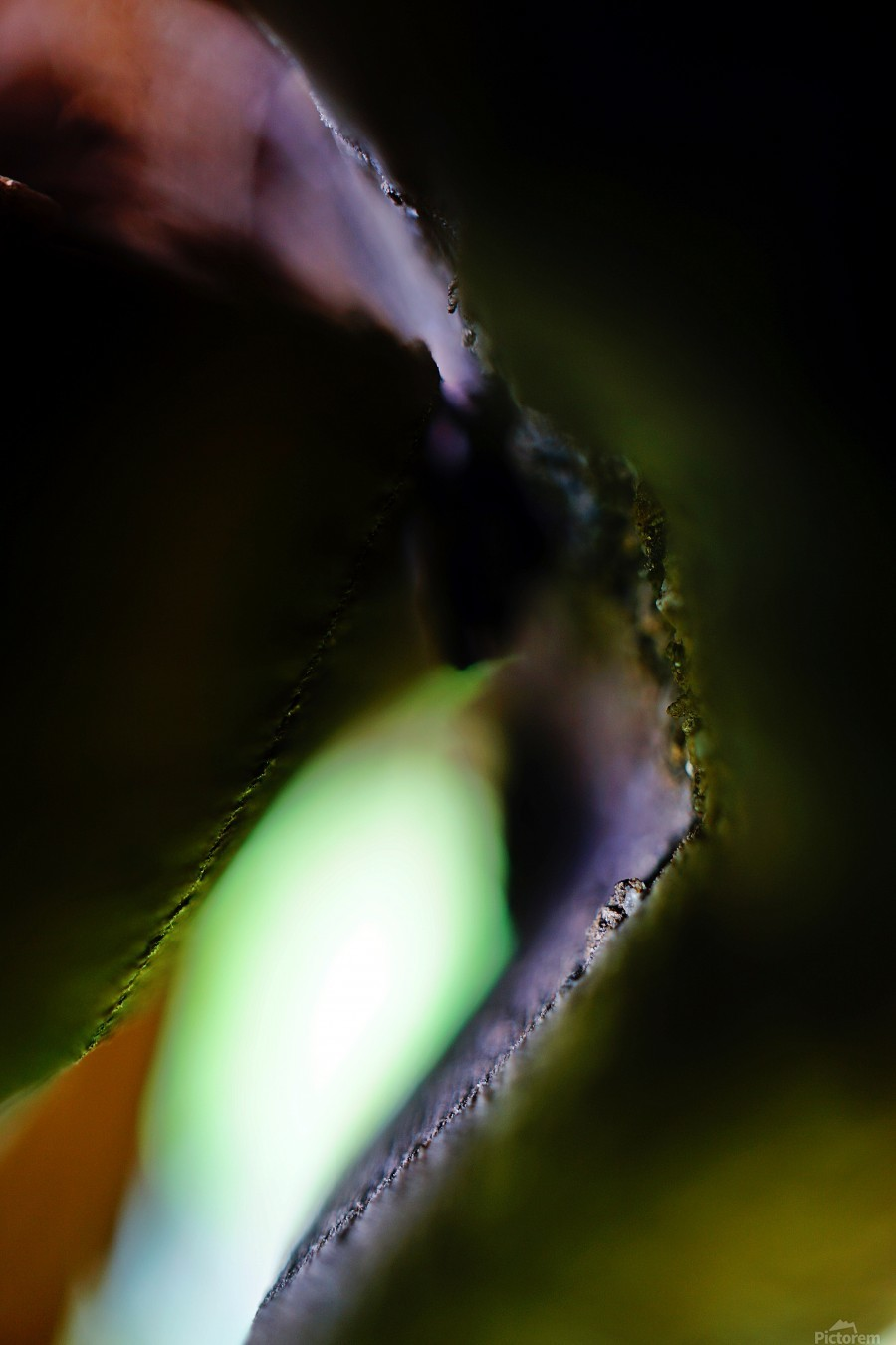 Abstract Macro Nature Photography 13  Print