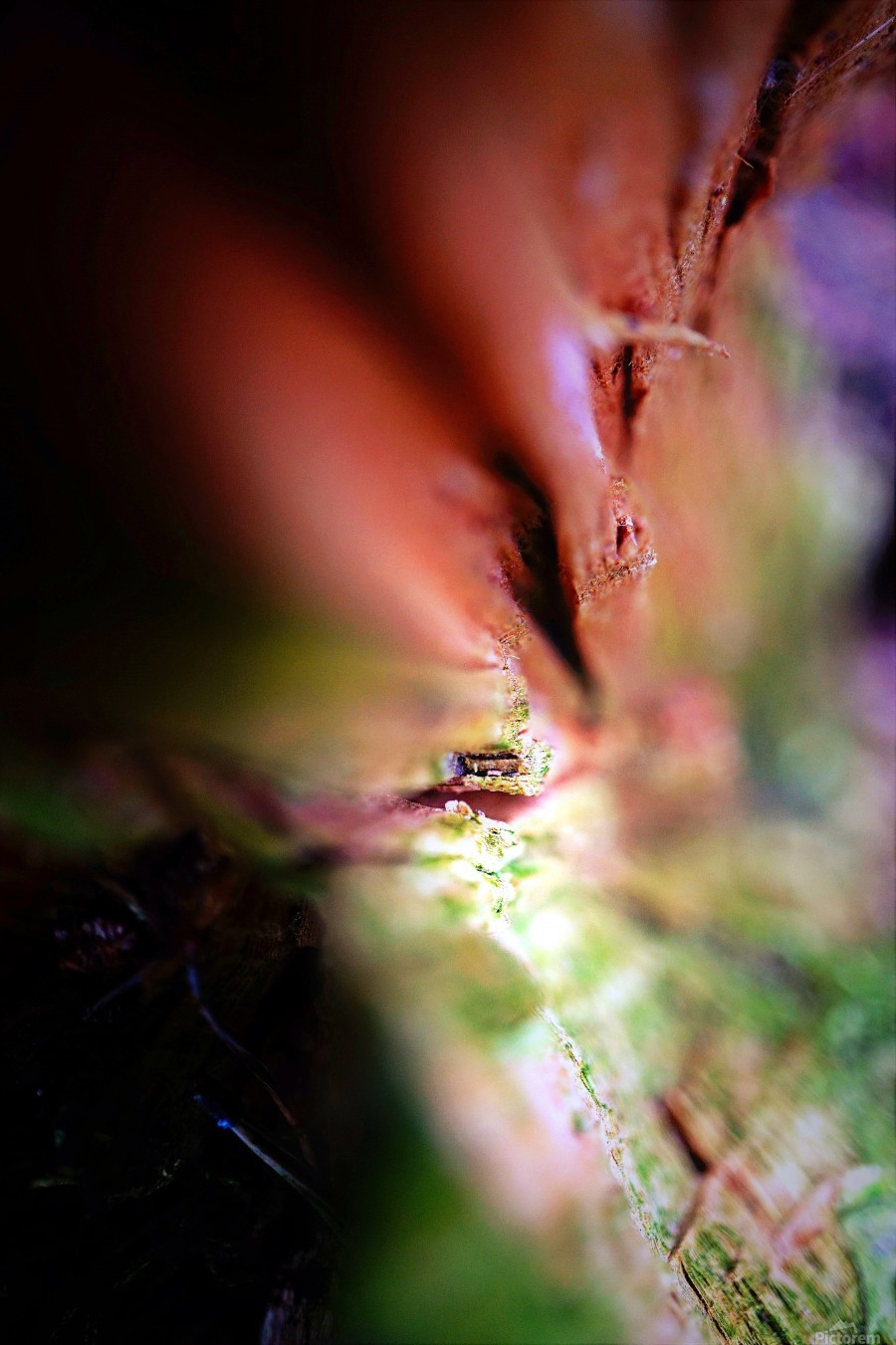Abstract Macro Nature Photography 84  Print