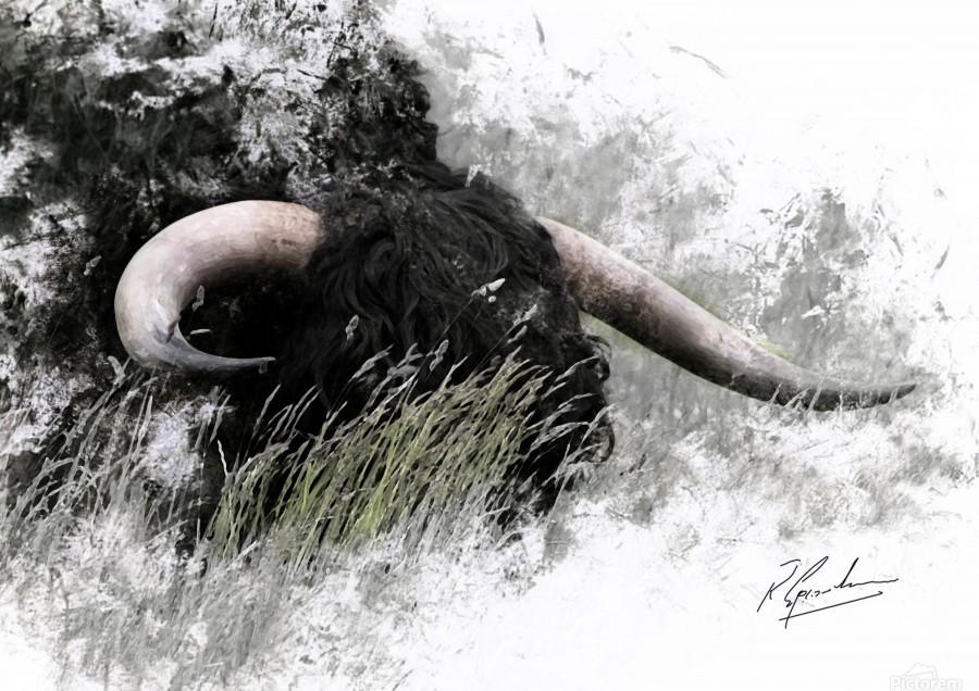 Bull in long grass  Print