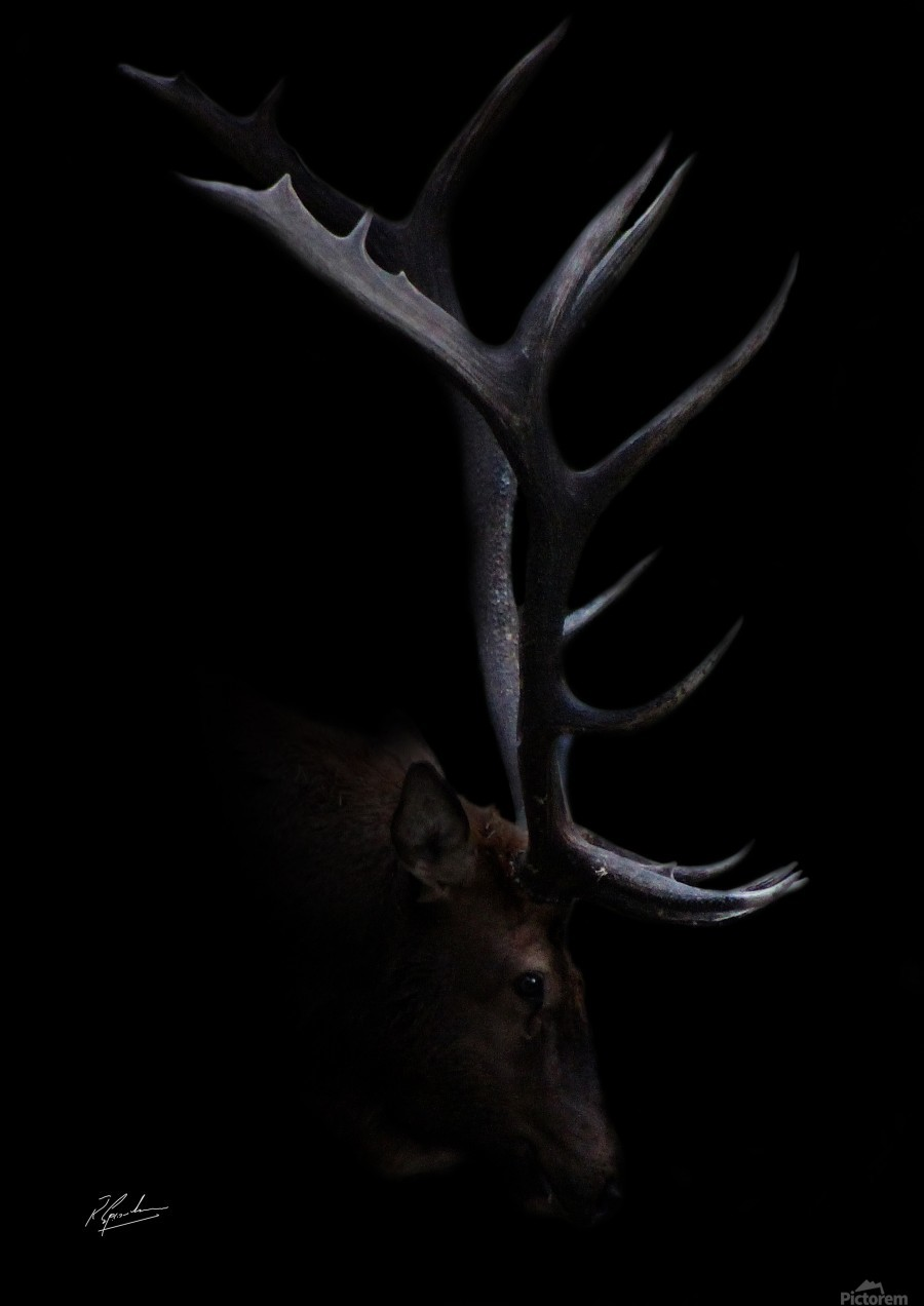 Elk in Black  Imprimer