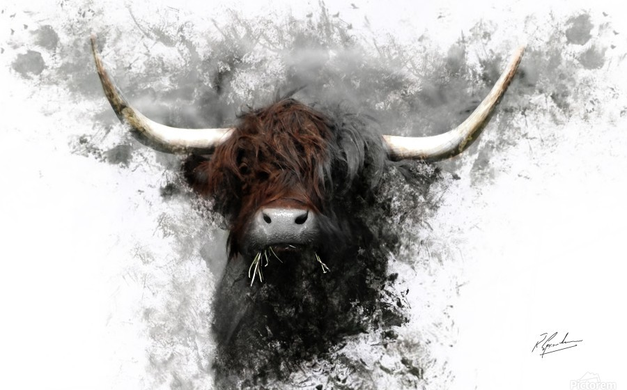 Highland Cow in Ink  Print