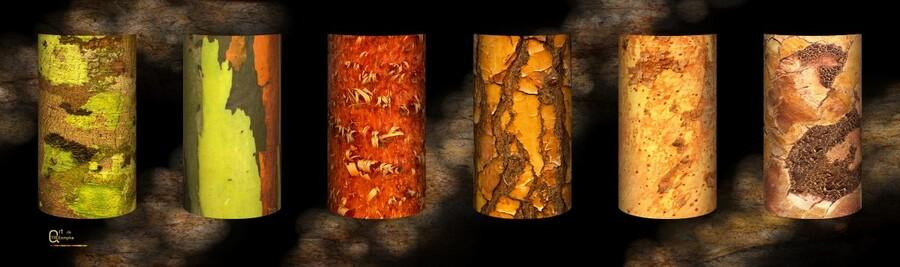 tree bark harmony  Print