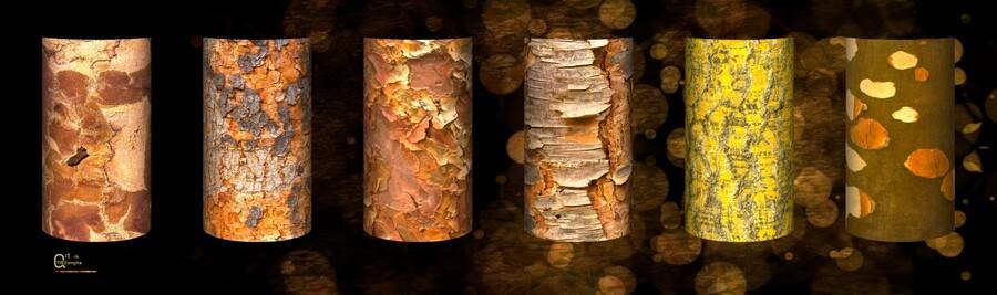 tree bark symphony  Print