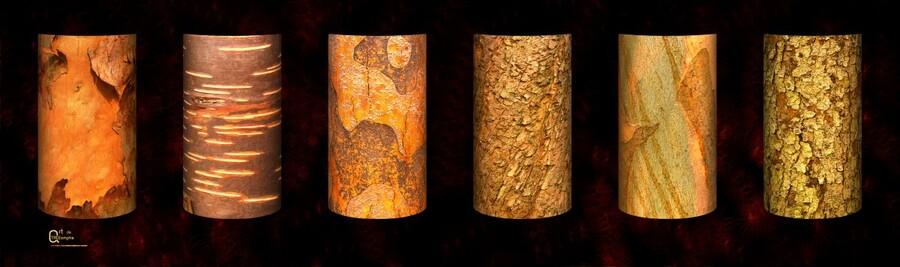 tree bark red  Print