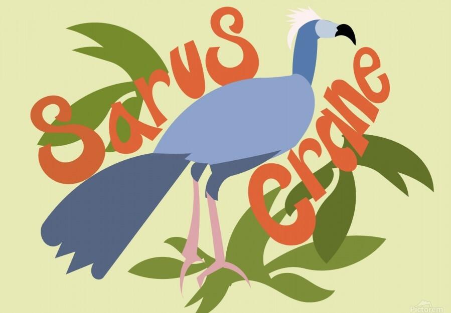 The Sarus Crane  Print