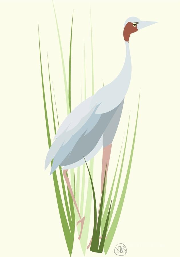 Sarus Crane  Print