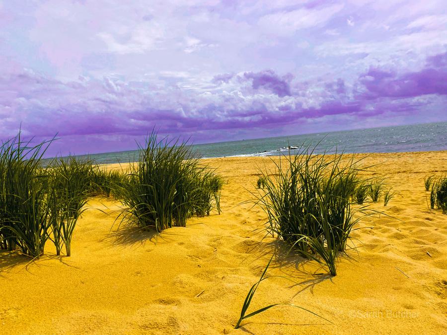 Dunes at Cape May  Print