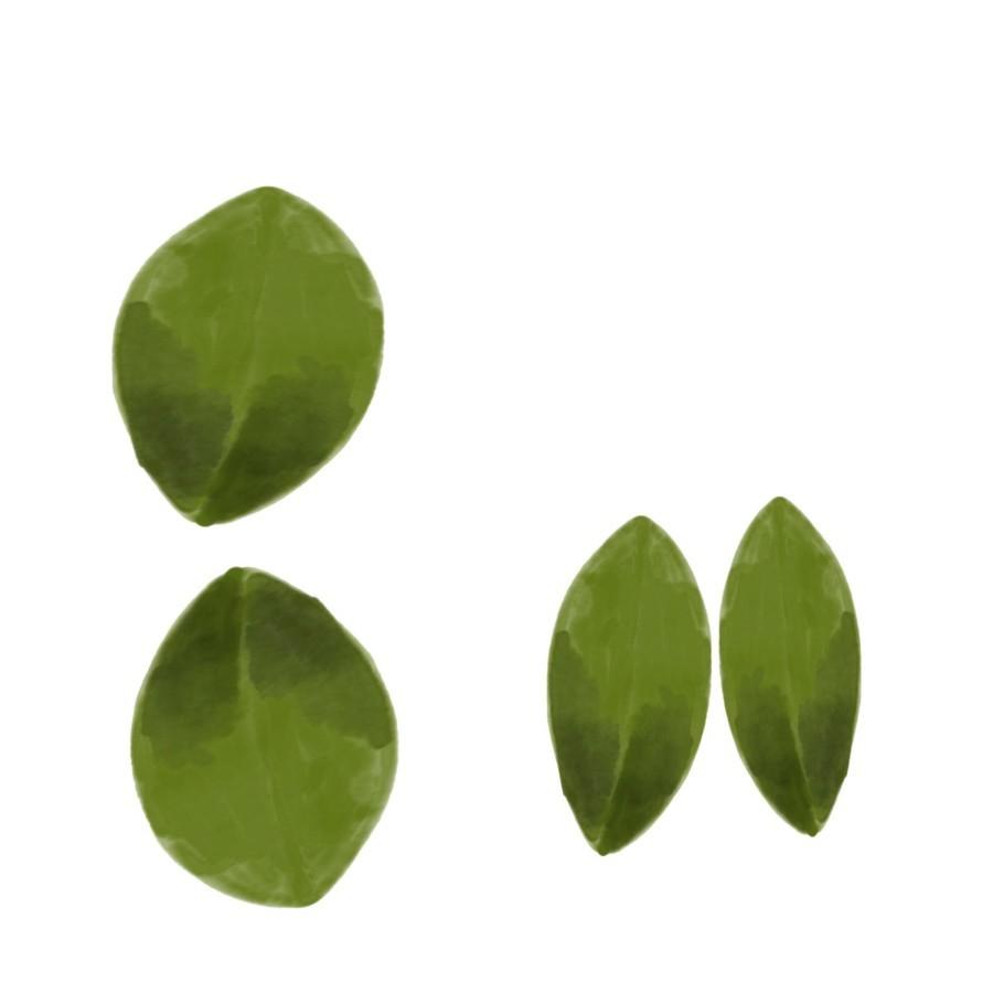 4 Leaves  Print
