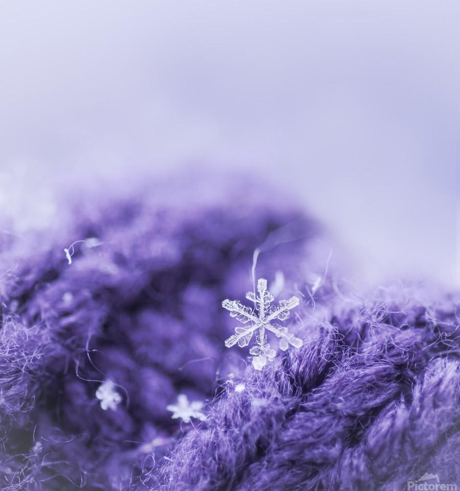 Purple Snowflakes  Print