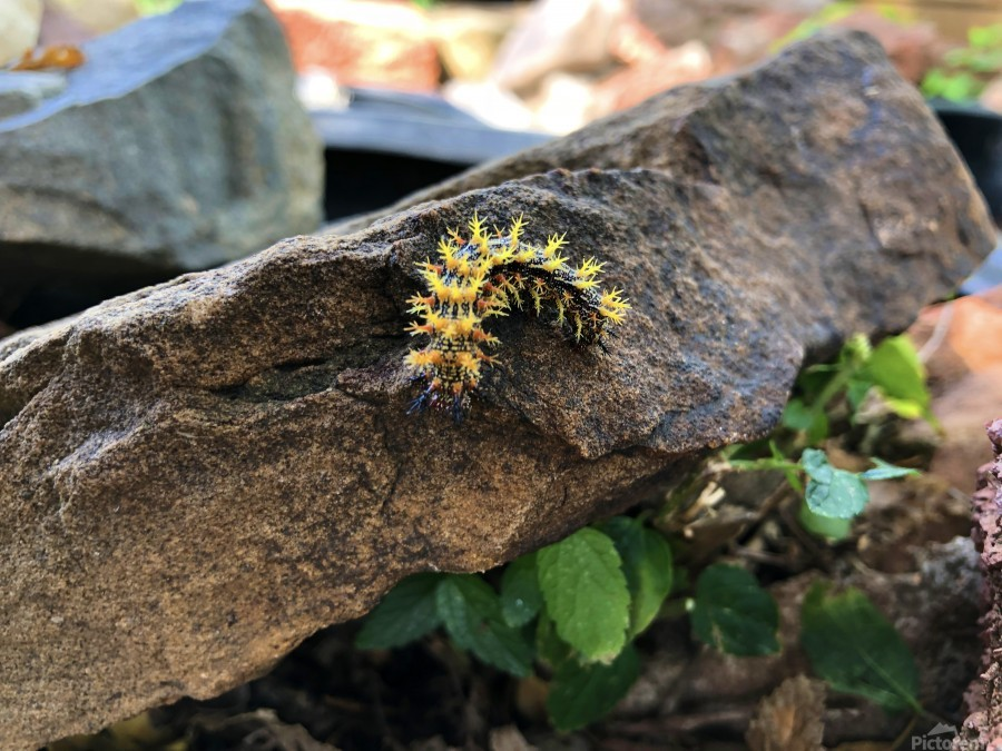 Caterpillar  Print