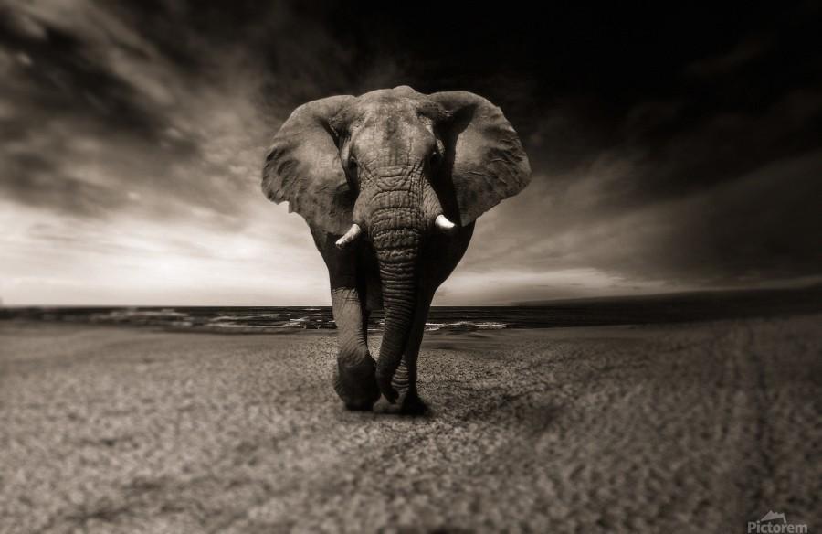 elephant animal africa safari  Print