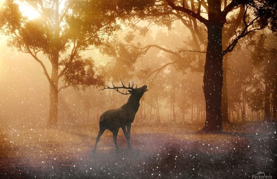 hirsch wild antler nature forest  Print