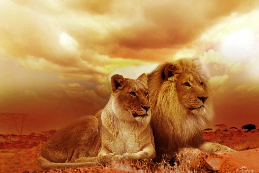 lion safari africa landscape  Print