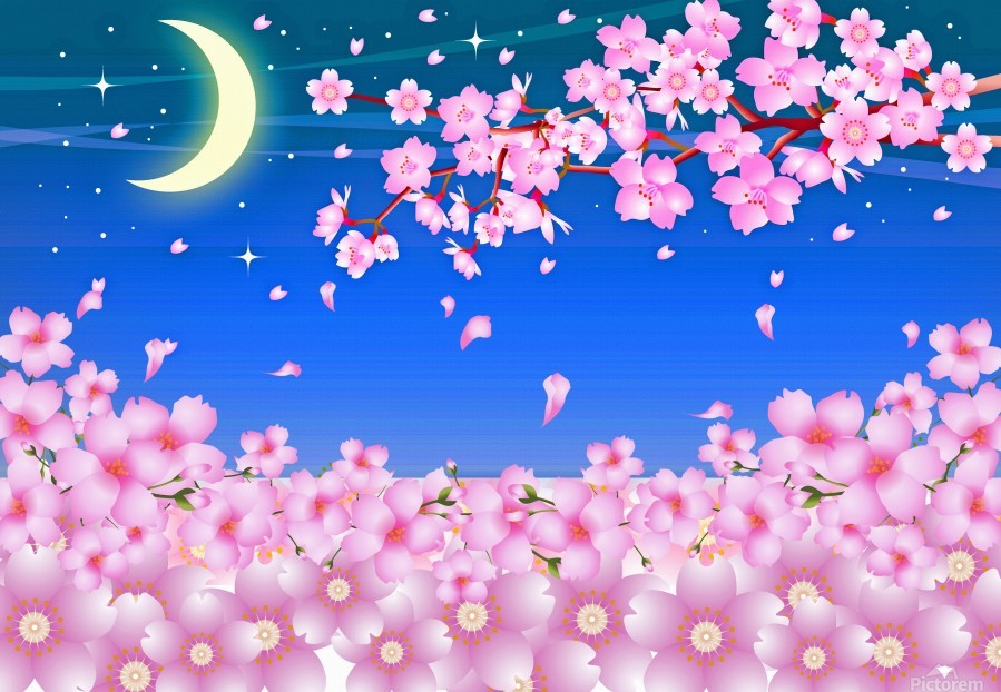sakura cherry blossom night moon  Print