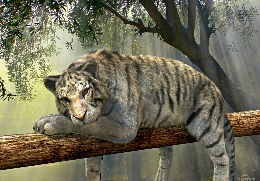 tiger animal jungle rainforest  Print