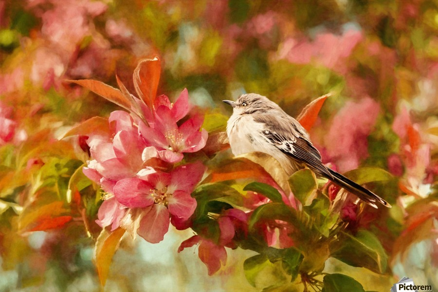 Sparrow In The Apple Tree  Print