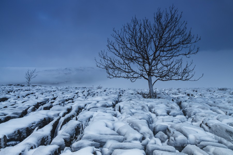 Cold Blue Trees, Yorkshire Dales, UK  Print