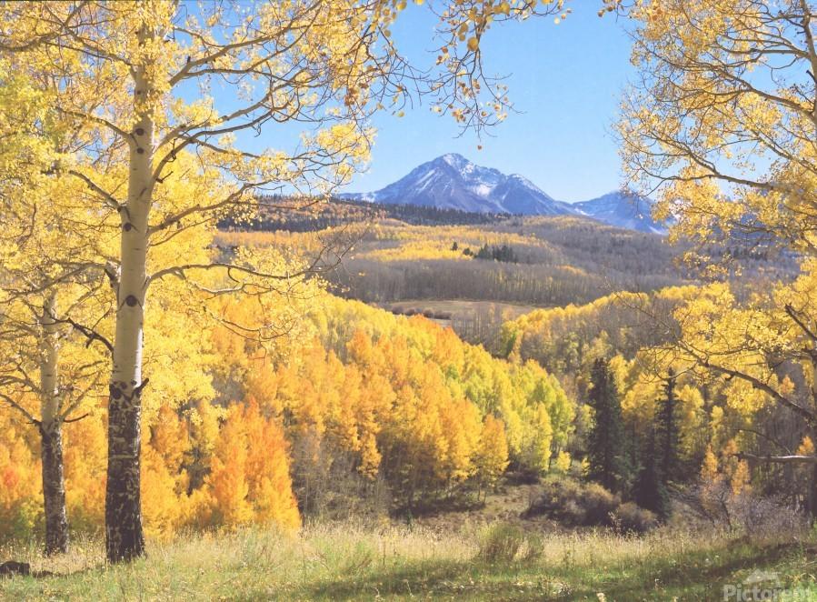 Sunshine Peak through the Aspen  Print