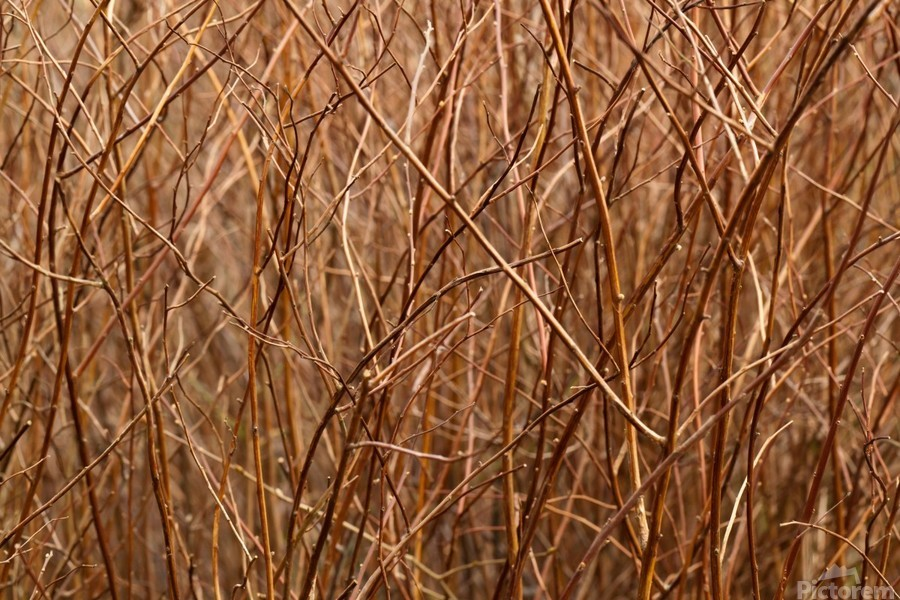 Abstract Background Branch Brown Color Flora  Print