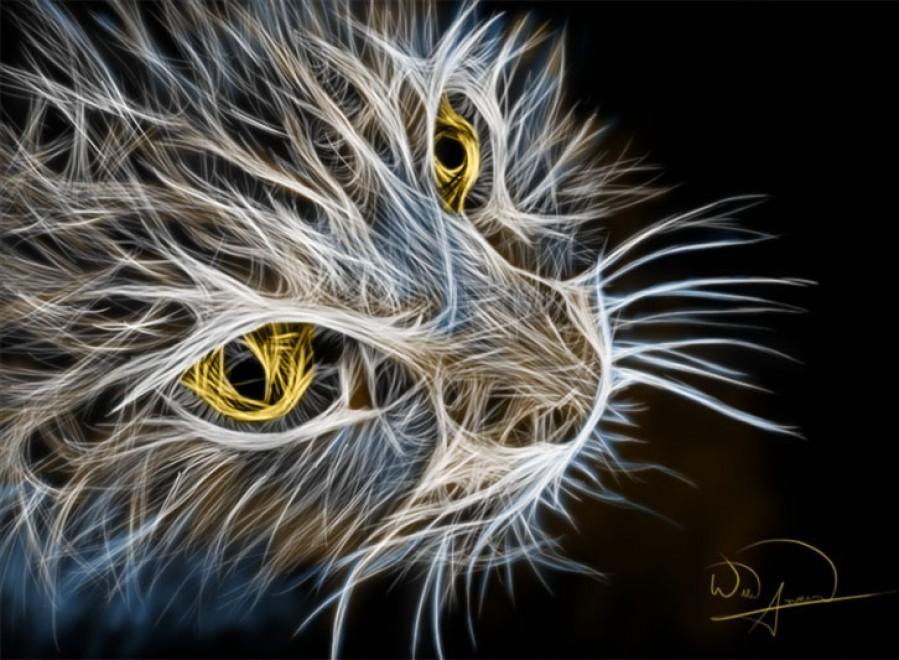 Cat Abstracto  Print