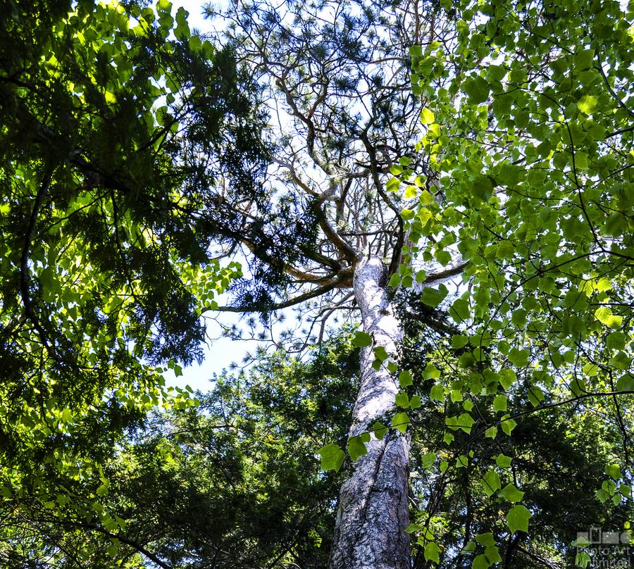 Skyview Canopy  Print