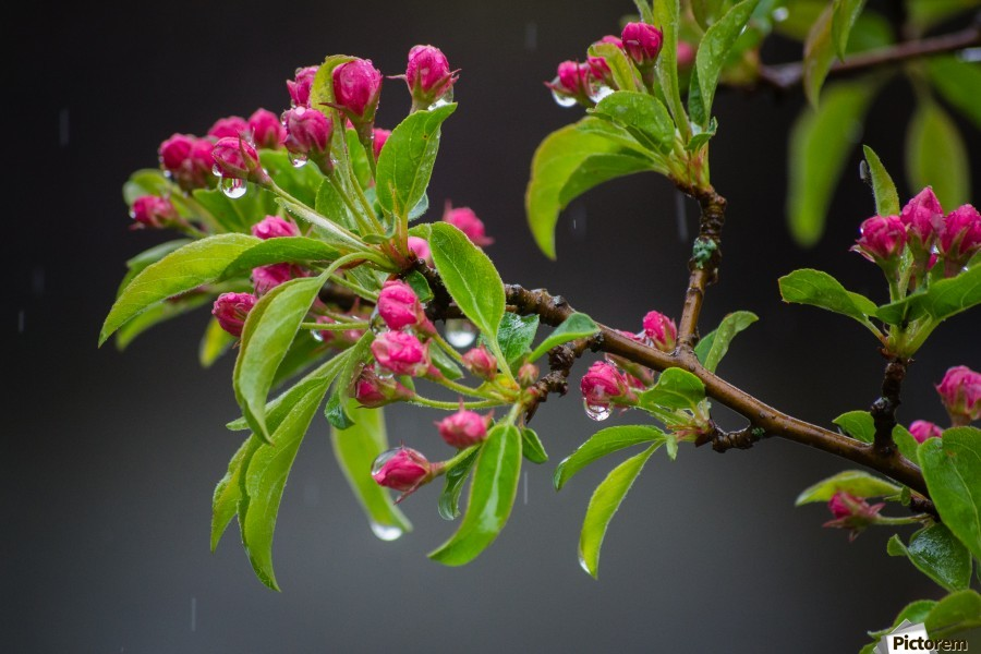 Spring has Sprung  Print
