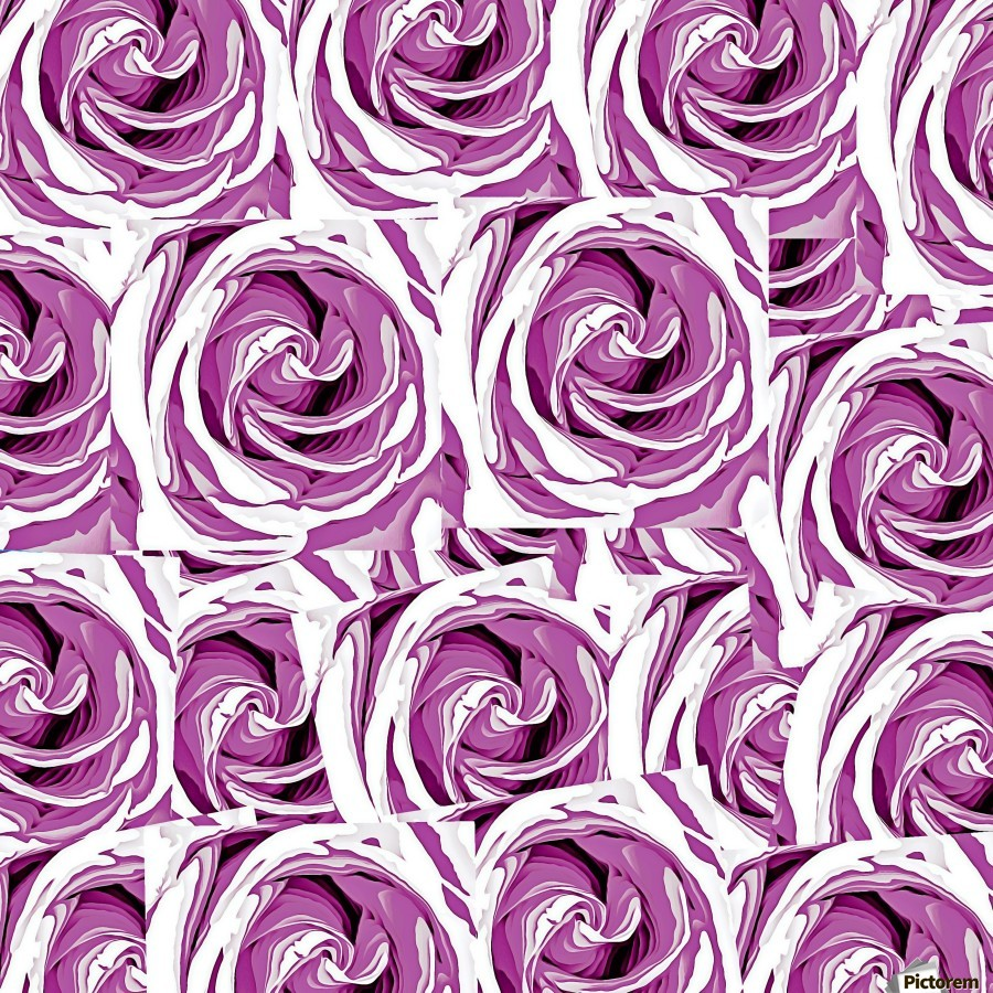 closeup pink rose texture pattern abstract background  Print