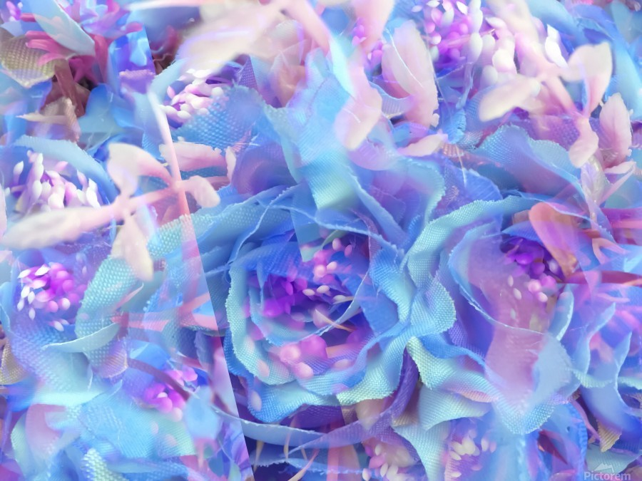 blooming blue rose texture abstract background  Print