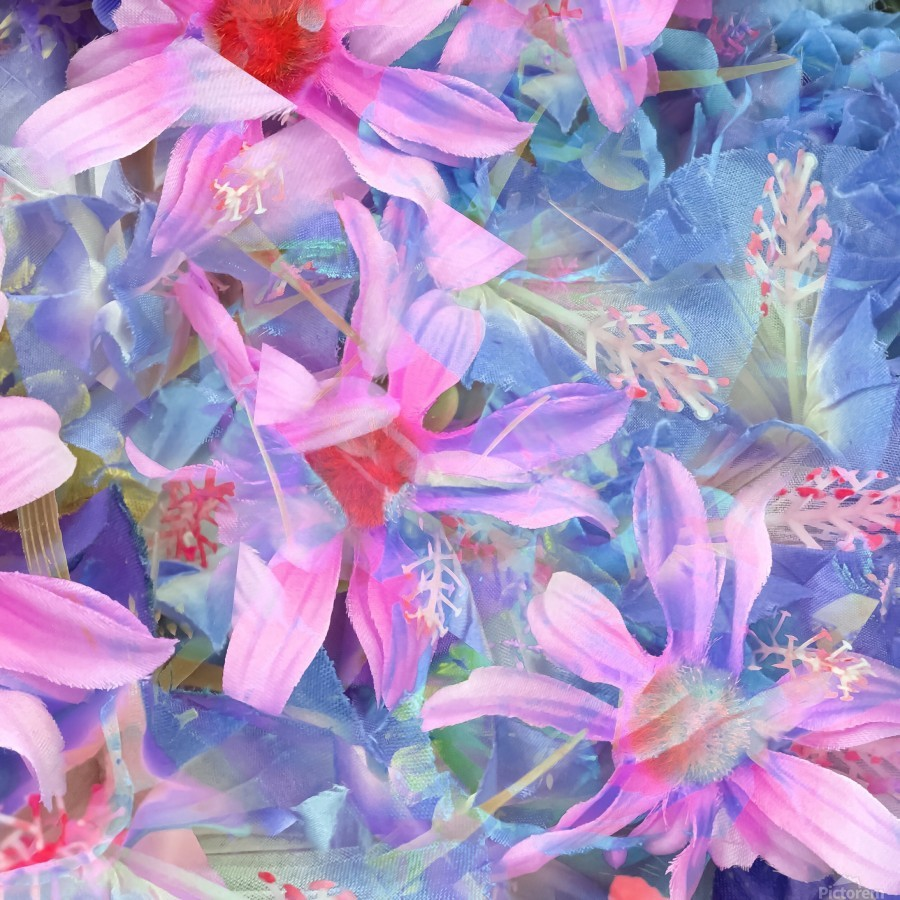 blooming pink and blue daisy flower abstract background  Print