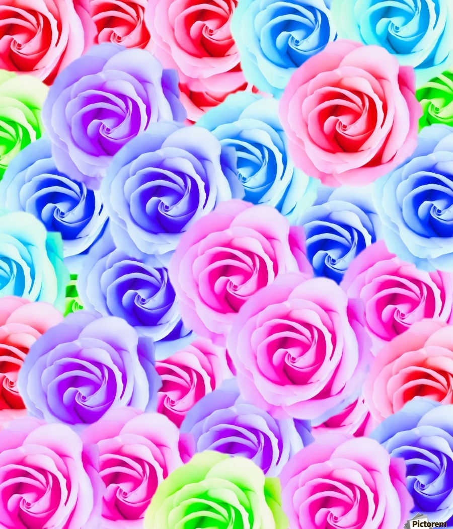 closeup colorful rose texture background in pink purple blue green  Print