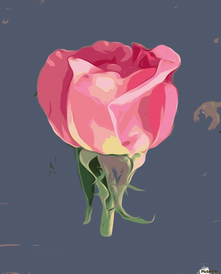 pink rose with grey background  Print