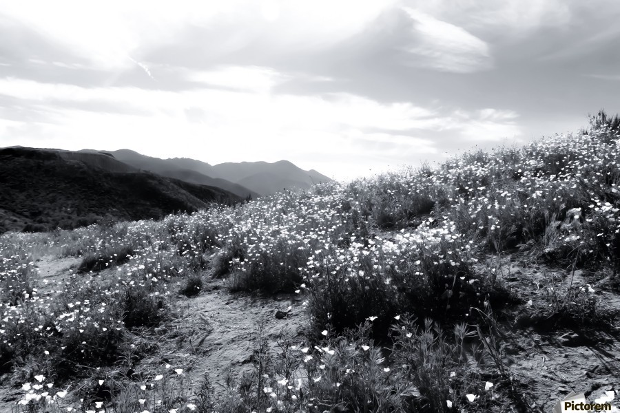 Poppy flower field with mountain and cloudy sky in black and white canvas print mightylinksfo